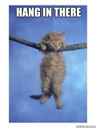 Hang in there kitty #3